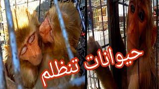 اجمل سوق للحيوانات في بغداد (سوق الغزل) استمتعوا