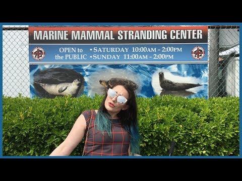 Weekends In Jersey | Marine Mammal Stranding Center