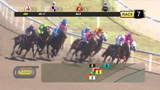 Vidéo de la course PMU PRIX NOVICE