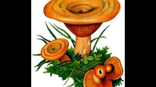 Лёха & засолка грибов рыжиков