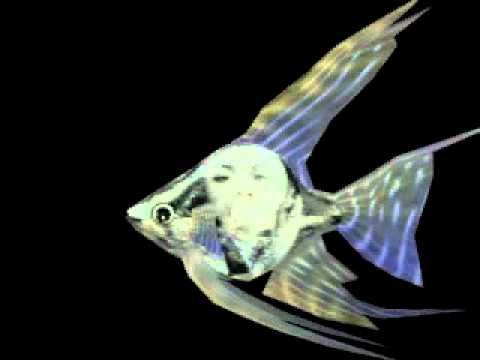 анимация рыбки