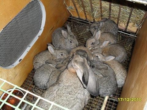 Клетки для кроликов своими руками простые фото