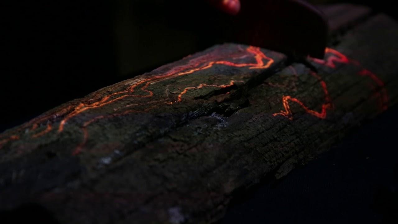 treecomb1