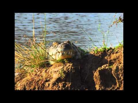 Africa Slideshow HD 1080p