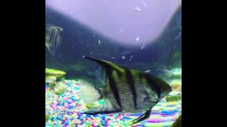 Grandson Fish