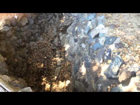 Palomar Artesian Springs