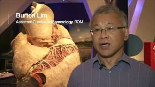 World's largest heart on display in rare exhibition   BBC News