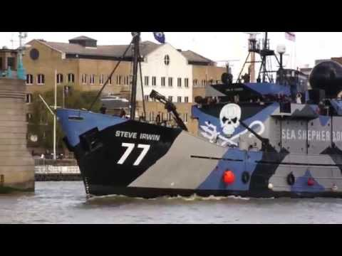 Sea Shepherd's Steve Irwin in London
