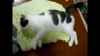 коту снится, как он убегает от собаки