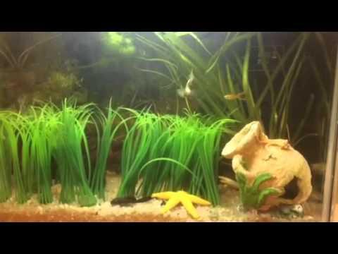Elementos b sicos para el acuario cap 5 plantas for Peces artificiales para acuarios