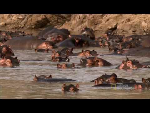 Gladiadores Mortais - Nat Geo Wild