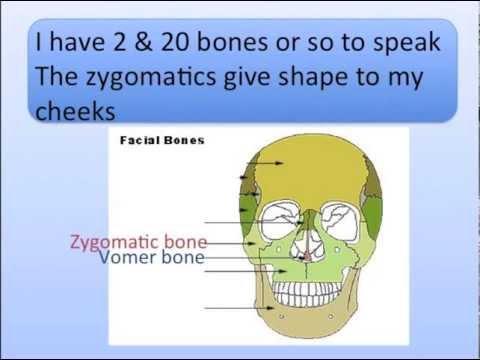 Head Bones Song