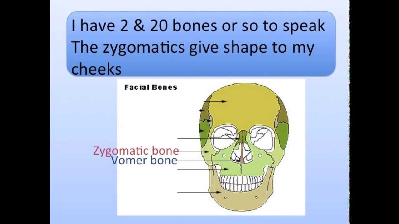 Head Bones Song - YouTube
