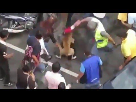 CRAZY DOG FIGHTING..