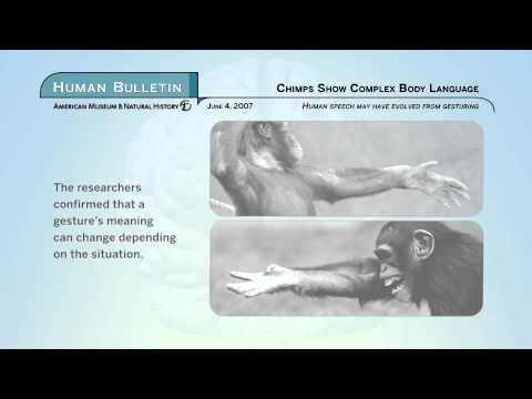 Science Bulletins: Chimps Show Complex Body Language