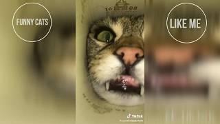 Funny Cats Videos Забавные Кошки Забавные животные Смешные коты