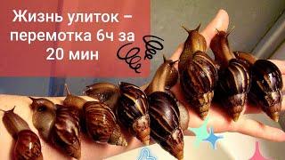 УЛИТКИ ахатины 6 часов за 20 мин / Быстрые улитки