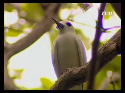 Haodigalaa - Dhondheeneege aa manzileh (Documentary)