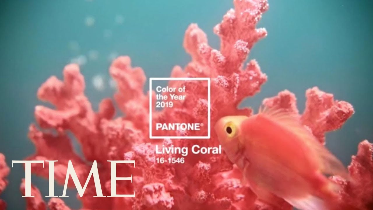 Pantone announces living coral is the 2019 color of the - 2019 color of the year ...