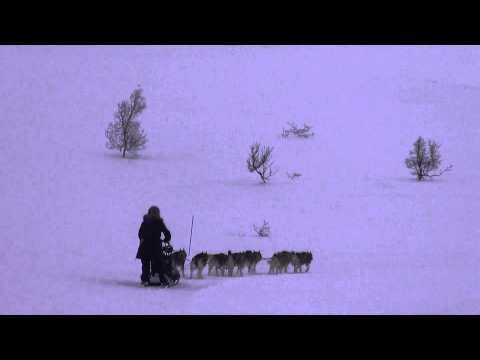 Arctic Power team ylämäkitreeniä @ Kilpisjärvi