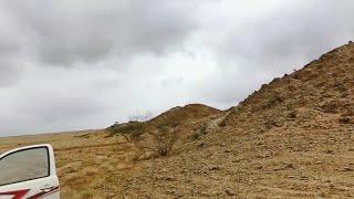 زراعة سدر في المناطق الصحراوية والشعاب  ب ١.٧٥ريال