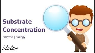 √ How does Substrate Concentration affect Enzyme Activity | iitutor