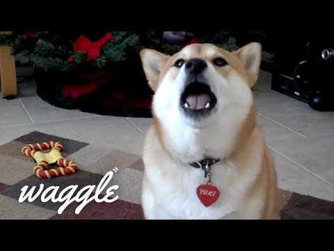 Talking Pets | Funny Pet Video Compilation