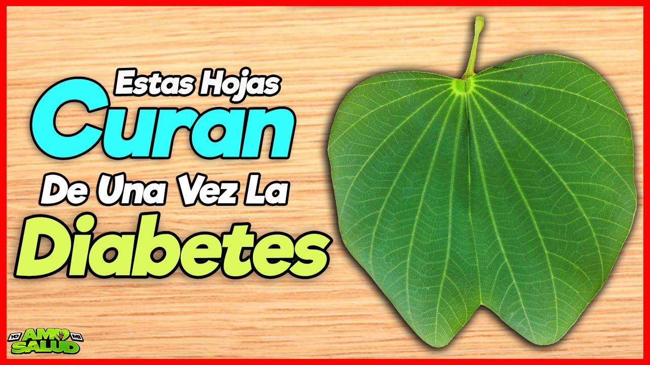 Pata De Vaca! Cura La Diabetes, Limpia Los Riñones, Ayuda A Perder Peso y Mucho Mas...