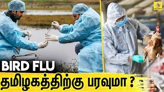 வெளிநாட்டு பறவைகளால் பரவும் பறவை காய்ச்சல்? | Bird Flu | Latest Tamil News