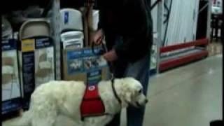 Service Dog Training Video(service dog training video., 2011-03-18T01:43:58.000Z)