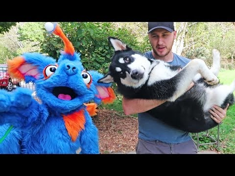Cute Dog vs Dog Puppet  Funny Dogs