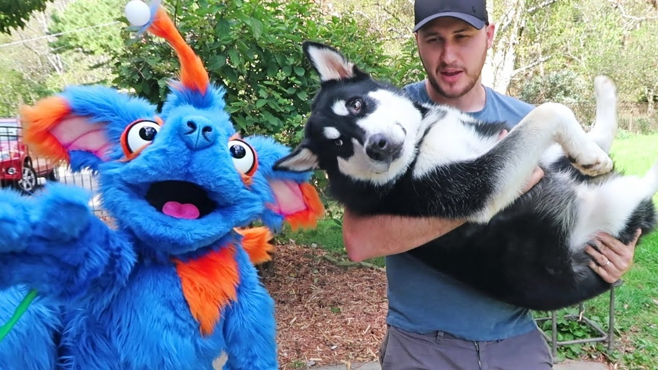 cute-dog-vs-dog-puppet-funny-dogs