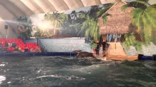 Шоу дельфинов в Хабаровске