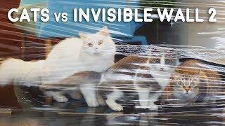 Cats vs Invisible Wall 2