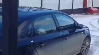 В Крыму машину эвакуировали вместе с запертой собакой