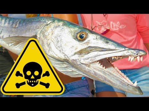 TOXIC Florida Barracuda Catch & Cook! WARNING: Possible Food Poisoning