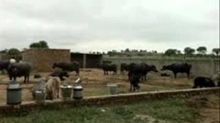 Dairy ka plan Qaiser Malik London sae wapsi  Dr Ashraf Sahibzada