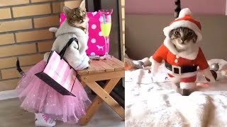 Funny Cats and Dogs Compilation 2019 🐕🦊🐩|Laugh Factory |Laugh Out Loud