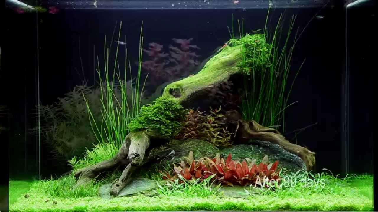 Layout 75 By Tropica Youtube