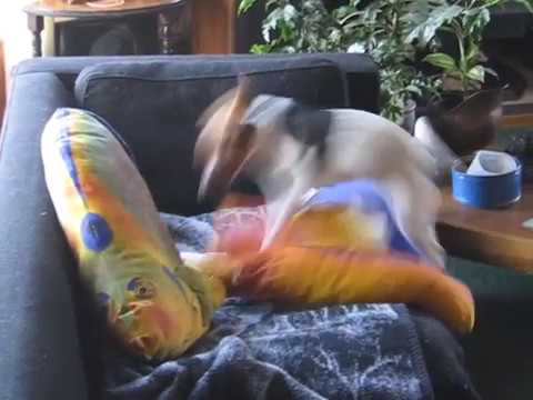 Wrangler Jack Roxie and bathtime spins