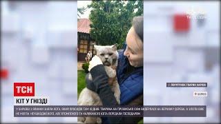 Новини України у Харкові зняли з ялинки кота який просидів там аж 10 днів