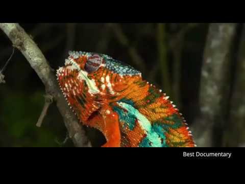 Flying Snakes : Wild Life : Best Documentary 2017