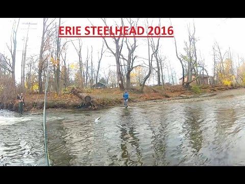 Erie Steelhead - November 2016