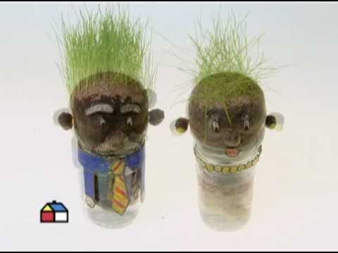C mo hacer un se or cabeza de pasto youtube - Como preparar unas judias verdes ...