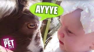 Animals Meet Kids For the First Time! | Funny and Cute Animal Videos
