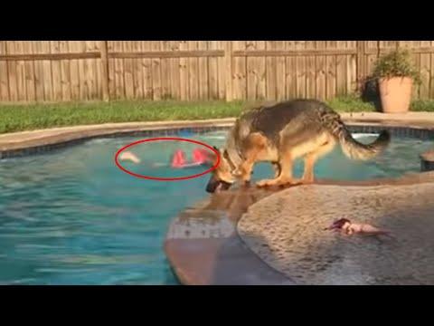 Der Heldenhund rettet