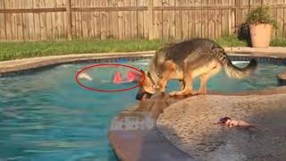 Der Heldenhund rettet ein Baby aus dem Wasser. 10 Mal, wieTiere Menschen retteten!