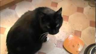 Эмоции кота || The Emotions of my Cat || Emocji mojego kota