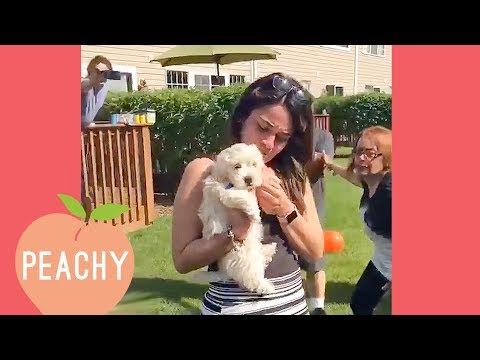 Puppy Proposals Make My Heart Melt | Best Proposals Ever!