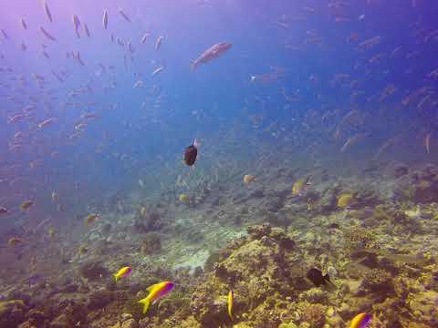 Beautiful coralreef
